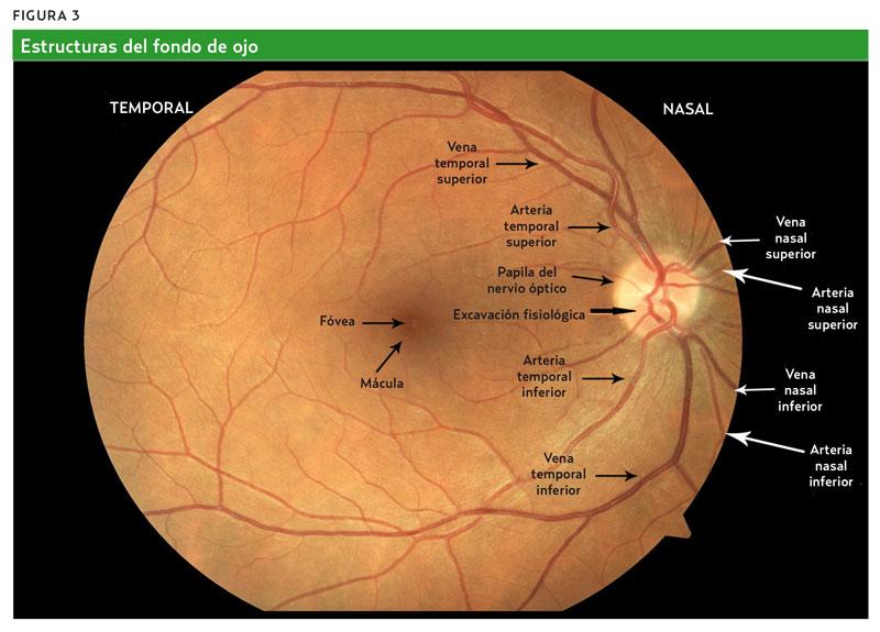 Técnica de exploración del fondo de ojo (AMF 2012) Paso a paso